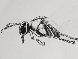 细腰大黄蜂