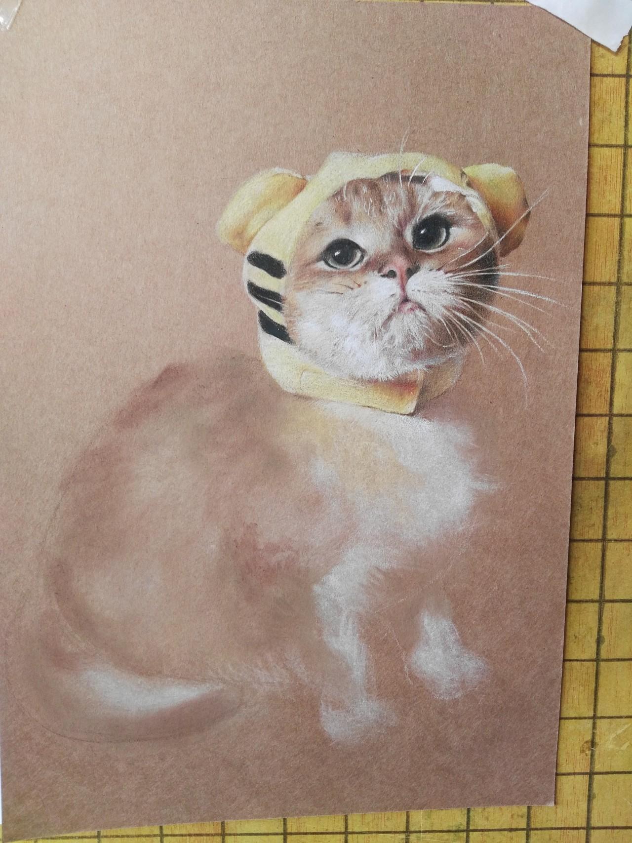 可爱彩铅_彩铅手绘小奶猫|纯艺术|彩铅|天使心小秋 - 原创作品 - 站酷 (ZCOOL)