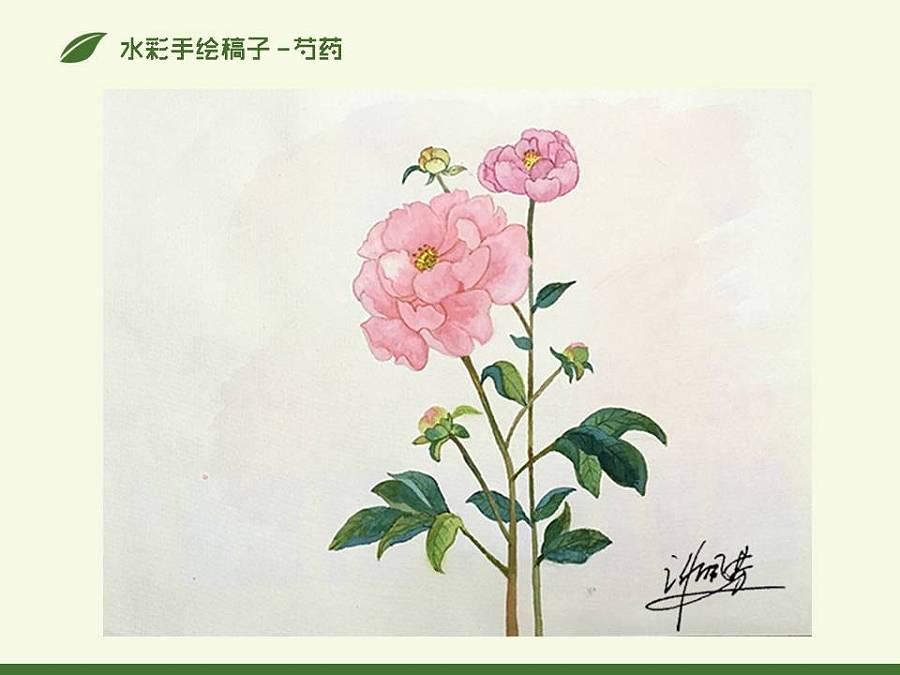 手绘植物包装设计