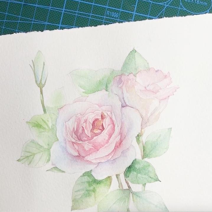 玫瑰花 洋桔梗 手绘 水彩过程 花卉 视频