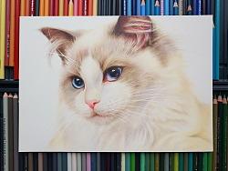 彩铅画《布偶猫》