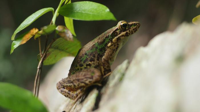 查看《滴滴出行×旅行青蛙:在你的世界等着你》原图,原图尺寸:700x394