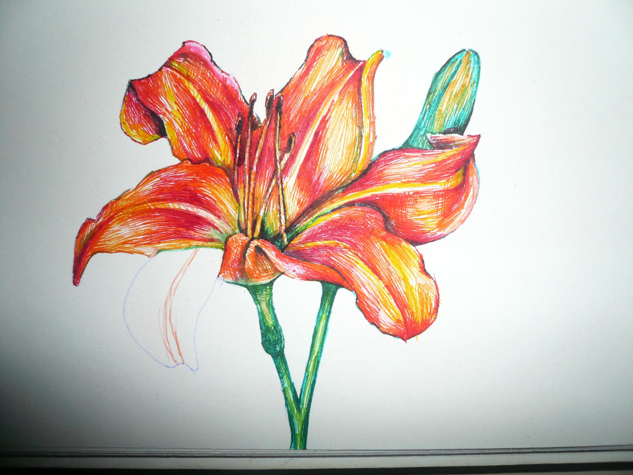 小清新花朵彩笔画