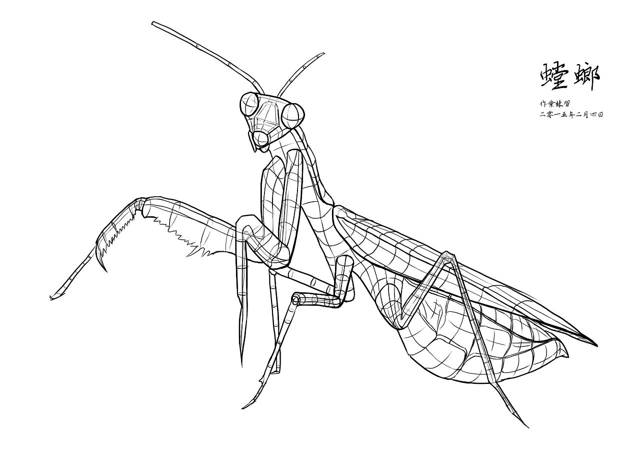 素描结构线条练习——螳螂