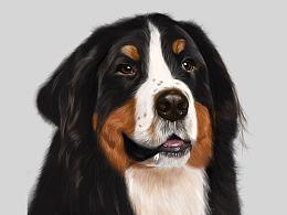 ipad pencil画一只凶猛的狗狗~嘻嘻~~