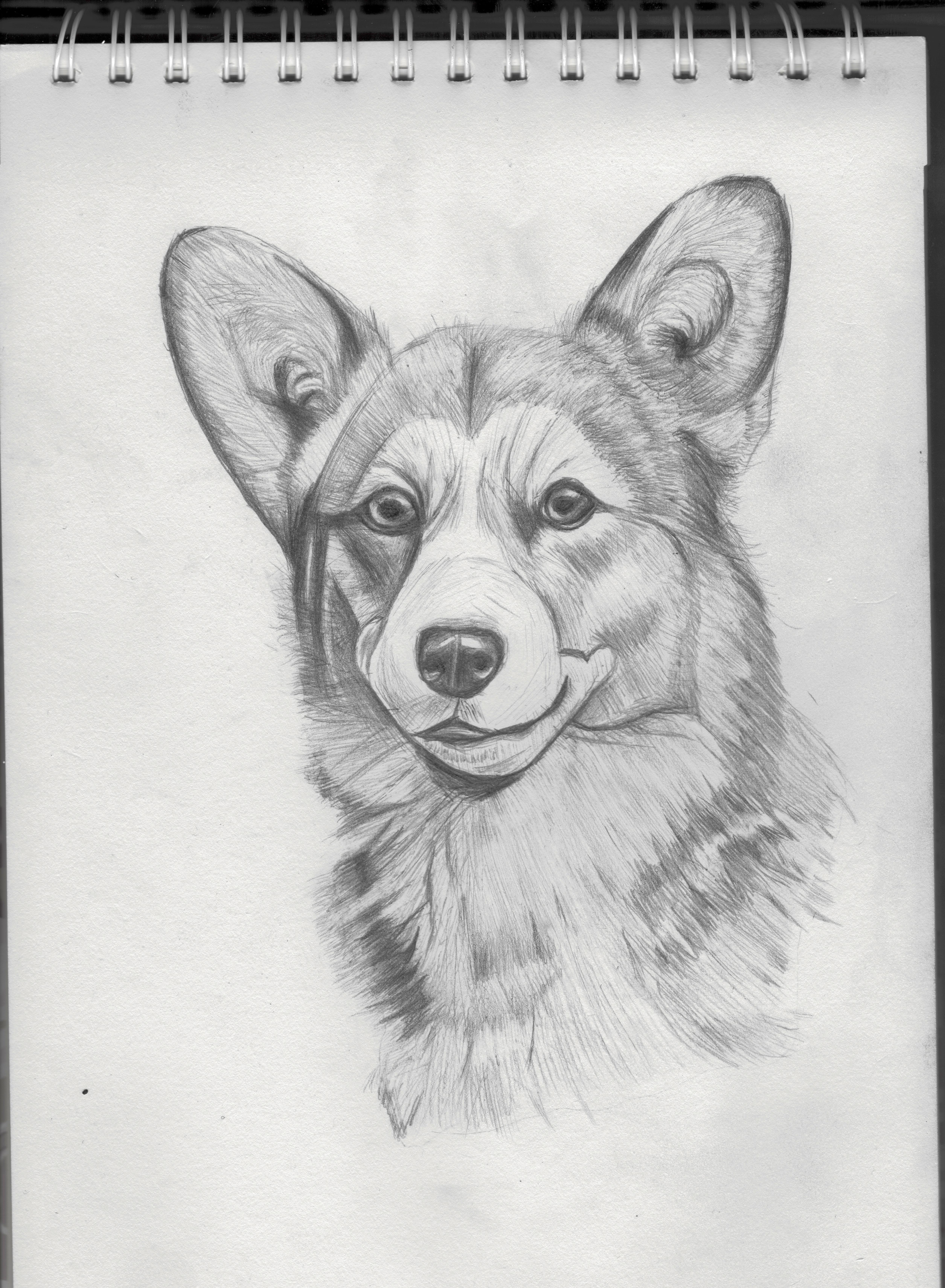 手绘练习-狗