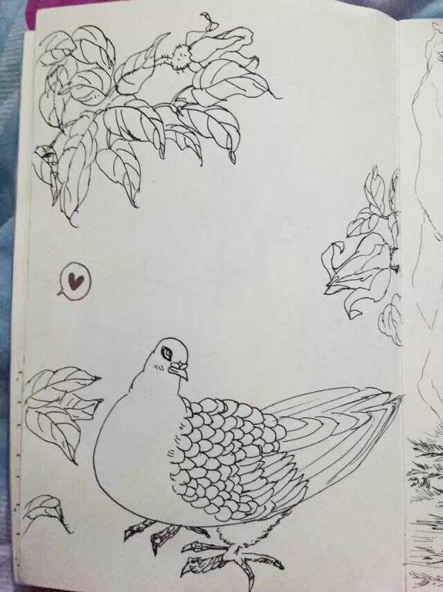 中性笔手绘,彩铅手绘|绘画习作