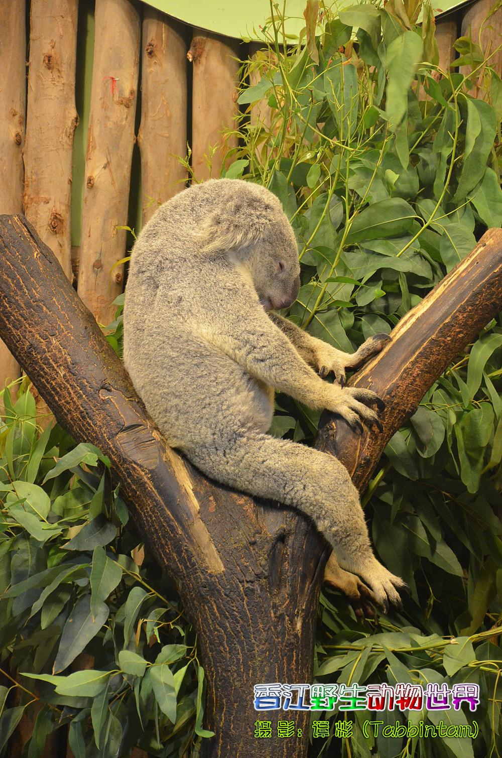 广州长隆野生动物世界摄影记