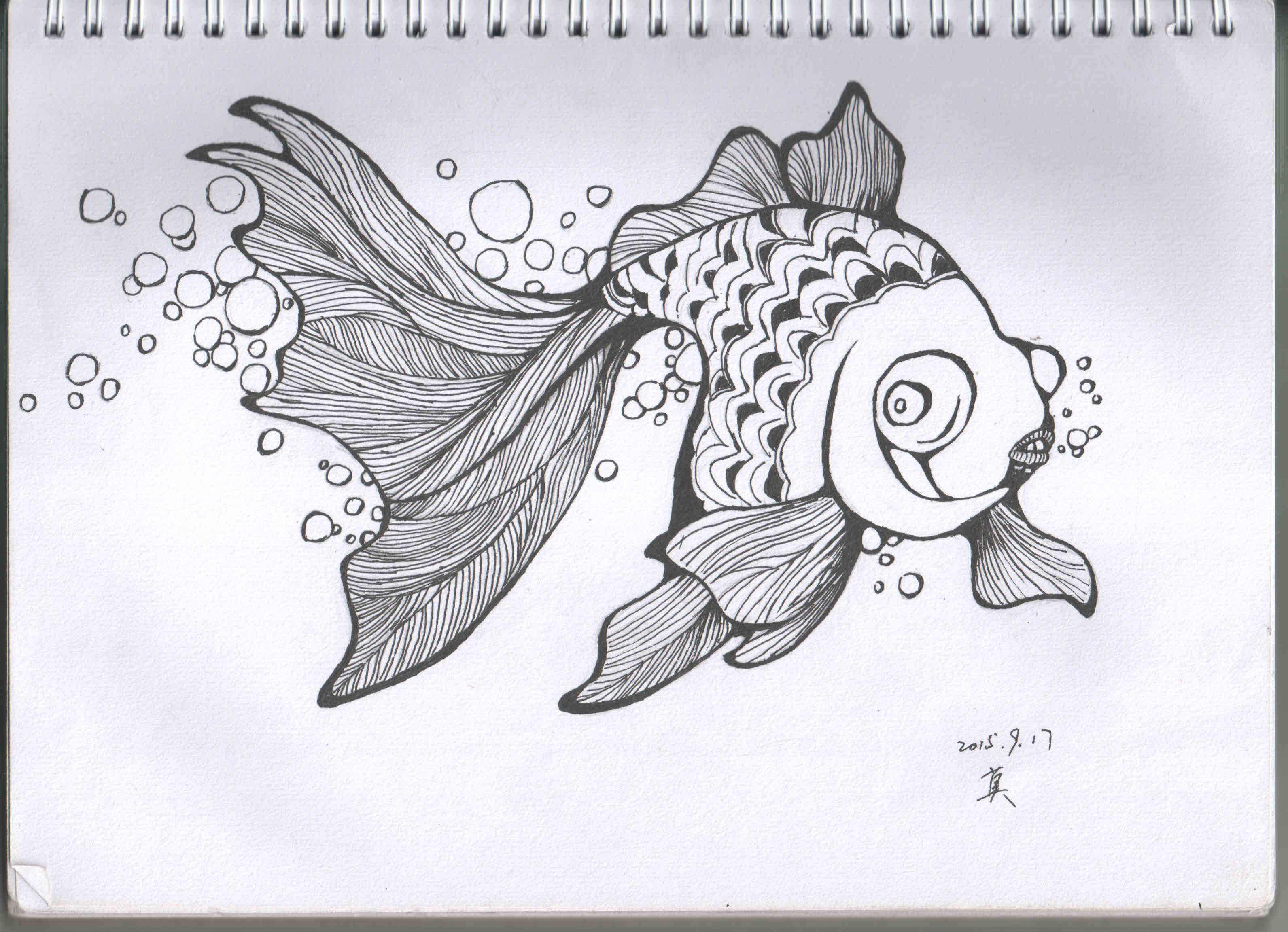 金鱼手绘插画