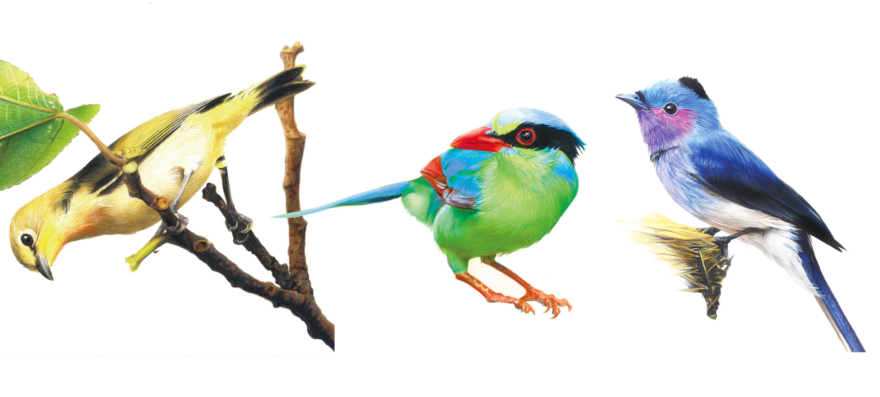彩色小鸟插图 纯艺术 彩铅 shengxia1001 - 原创作品