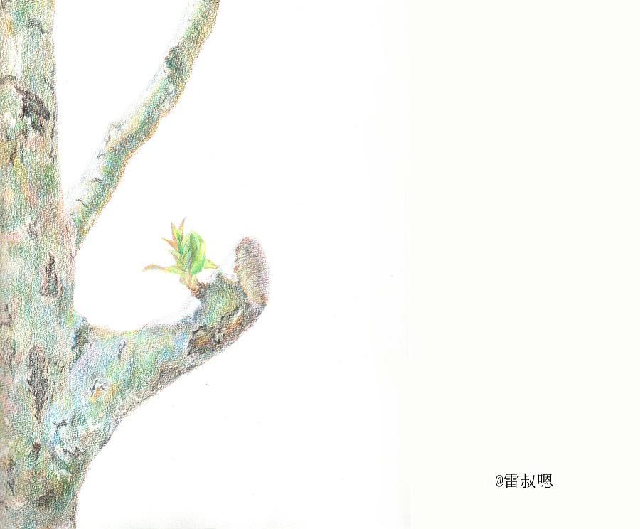 春之海棠树|彩铅|纯艺术|小人物占雷