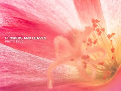 微距摄影花与叶