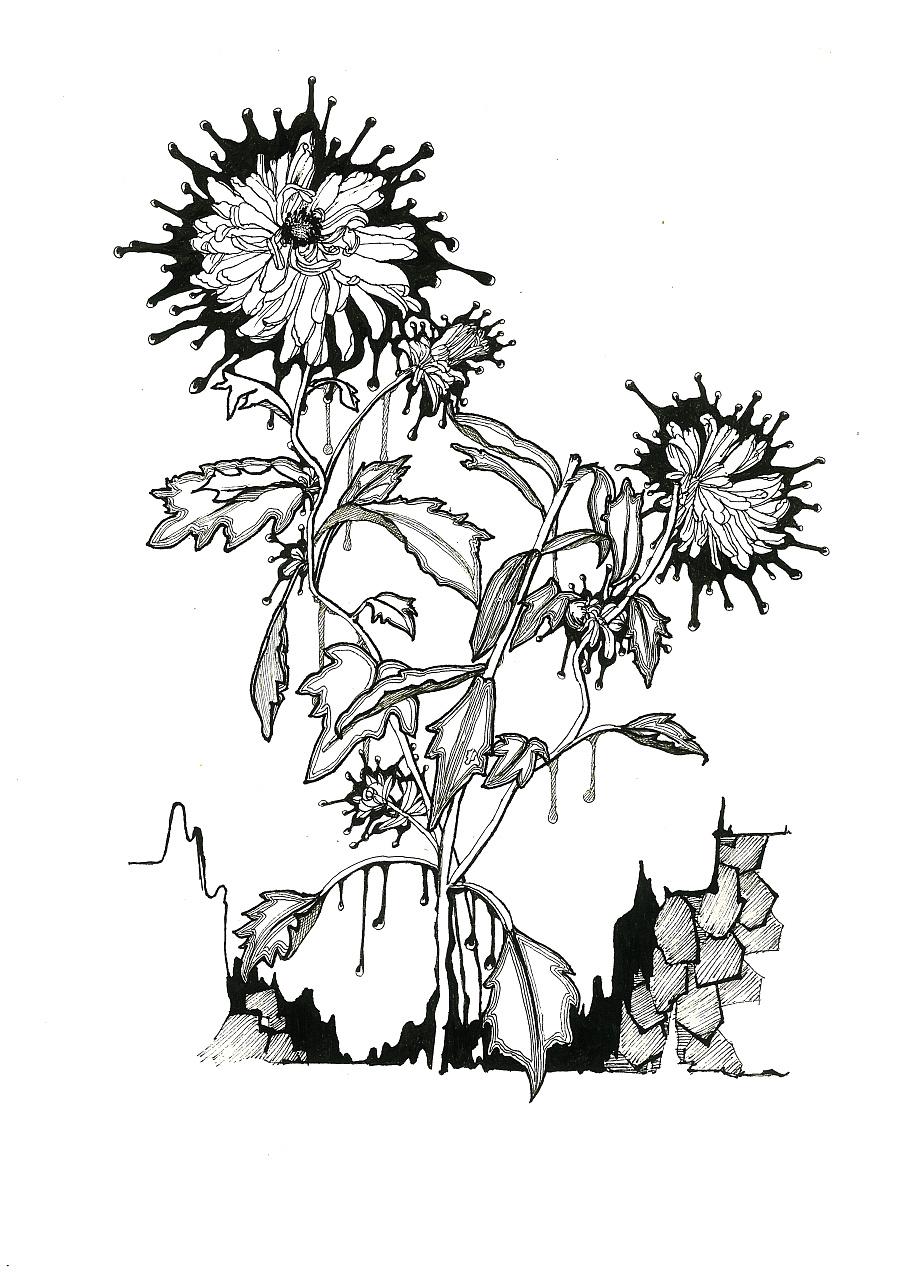 手绘 黑白装饰画 二 花卉