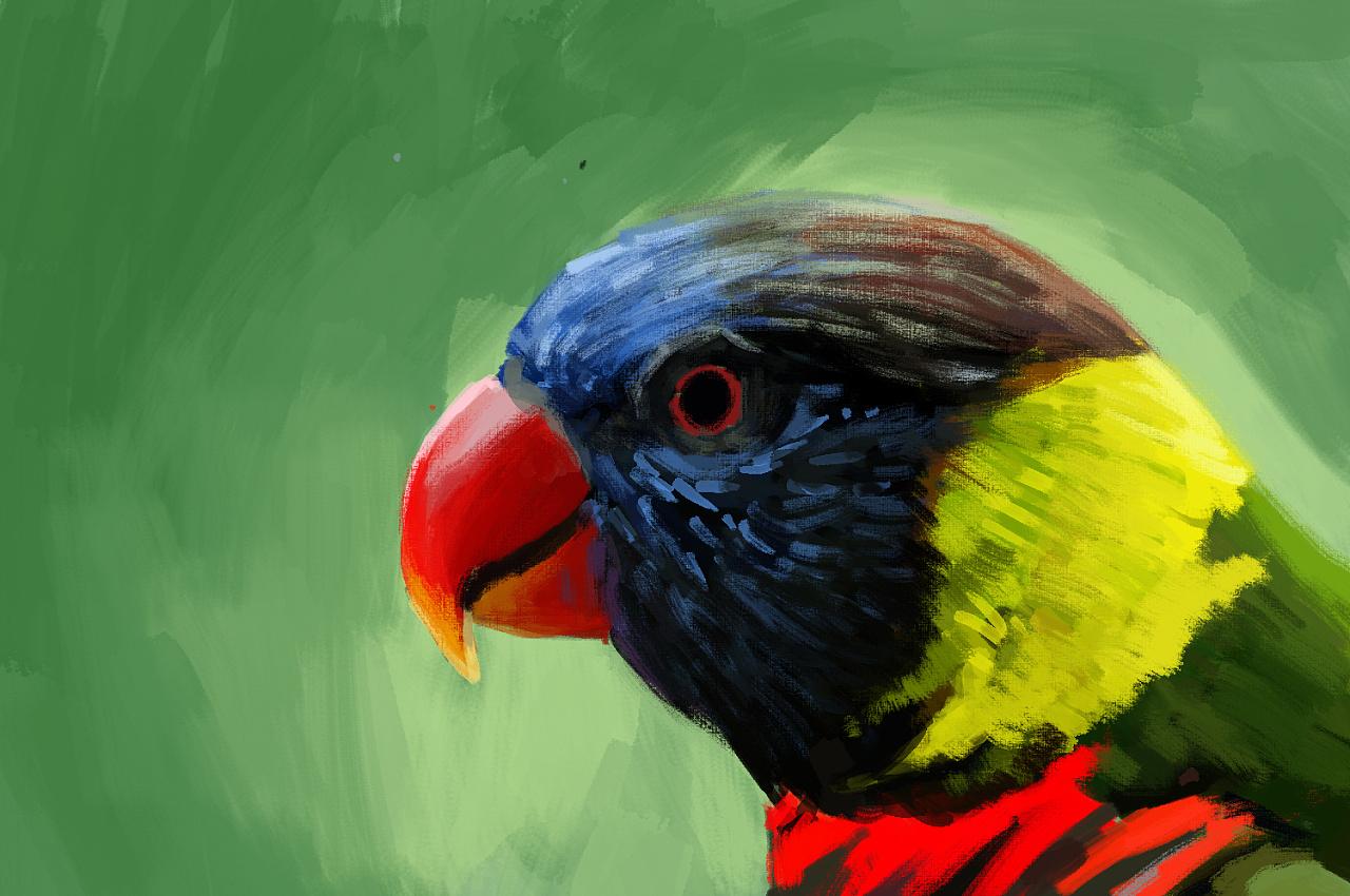 壁纸 动物 鸟 鹦鹉 1280_850