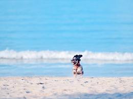 深圳宠物摄影-珀珀宠物摄影之海边的狗狗