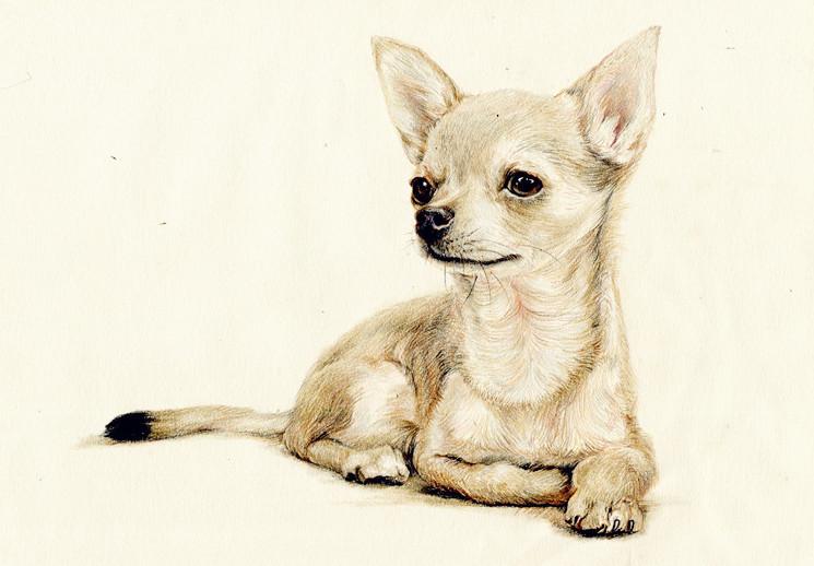 彩铅小动物|彩铅|纯艺术|箐莜