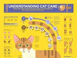 1806 Understanding Cat Care Infographic Poster