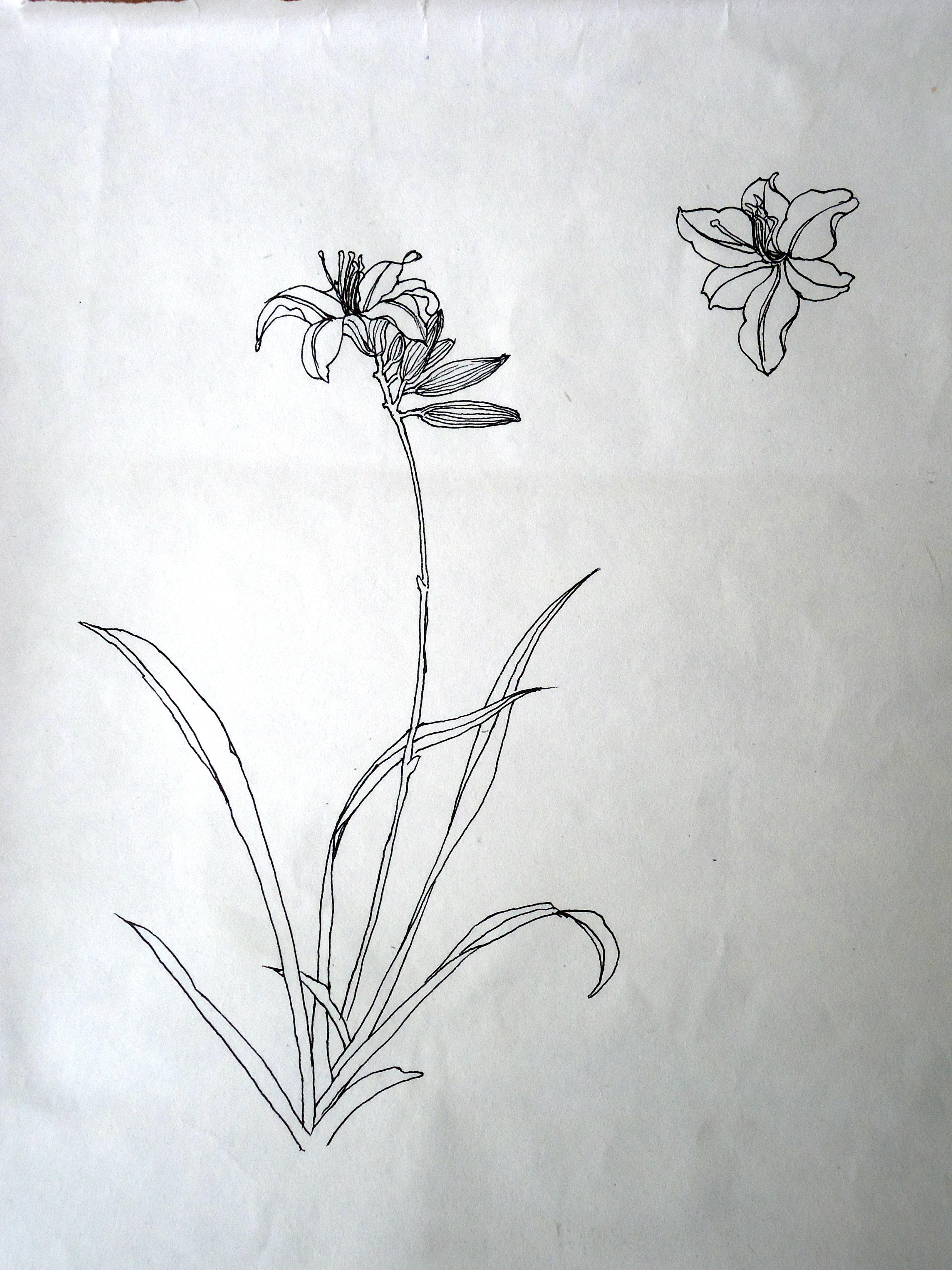 以水仙和百合花为原型奇思妙想的创作