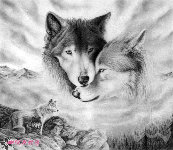 狼纹身图片作品