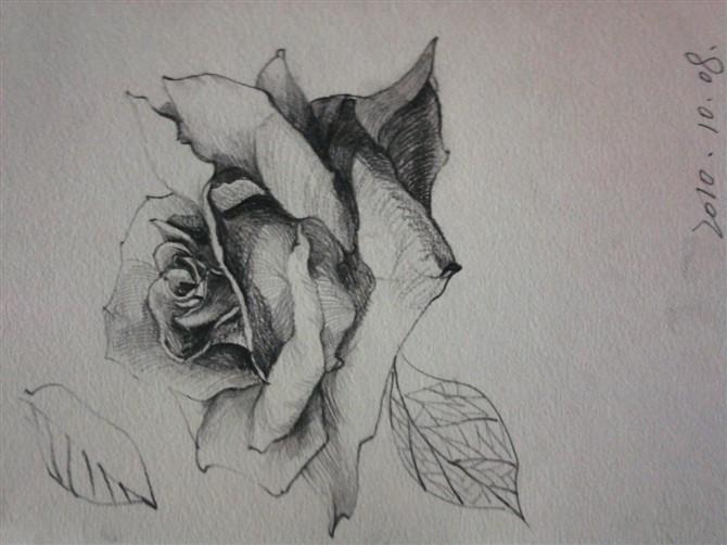 玫瑰花手绘速写