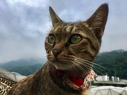 台湾——猫村