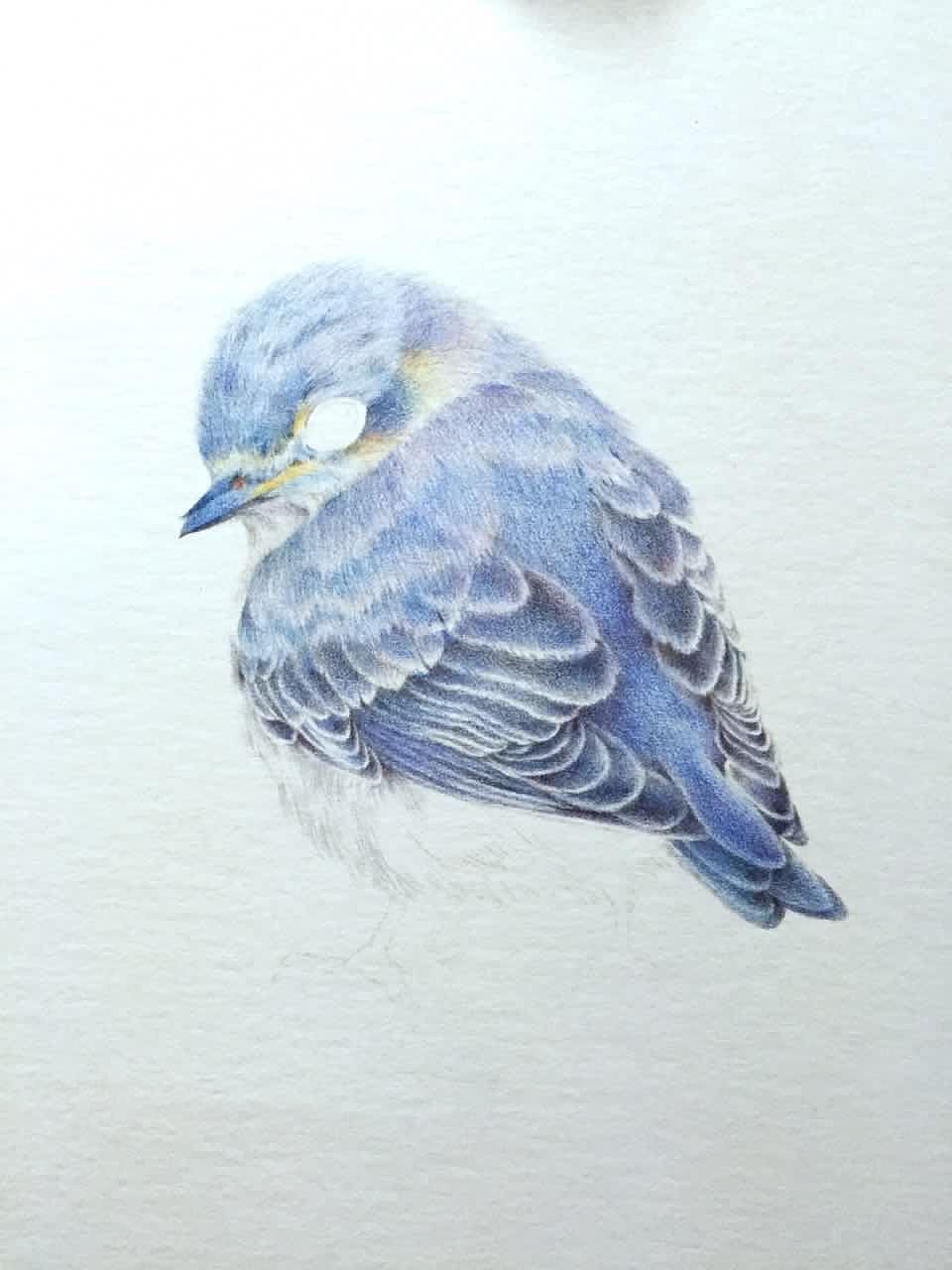 画出羽毛丝丝的质感图片