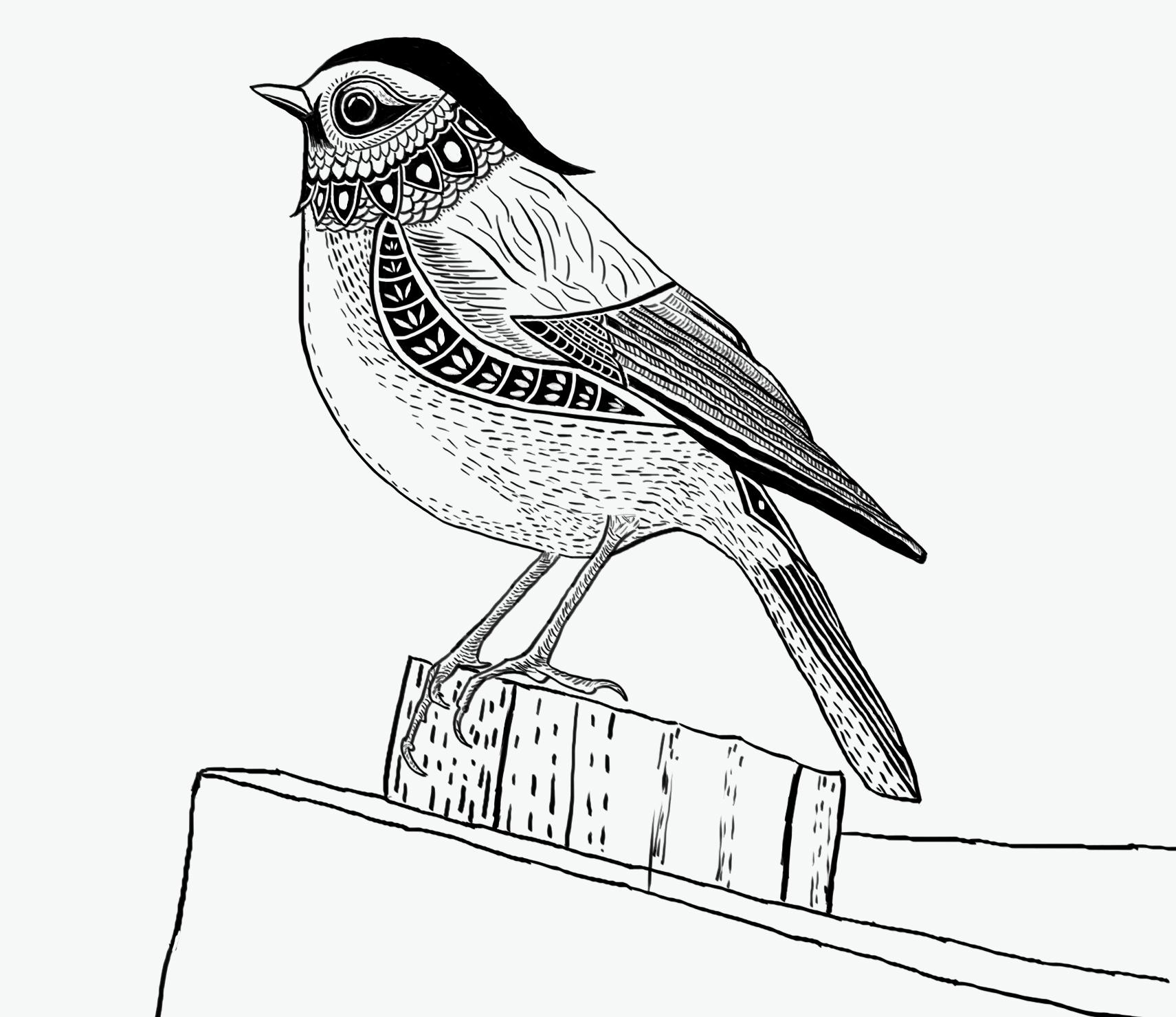手绘的小鸟