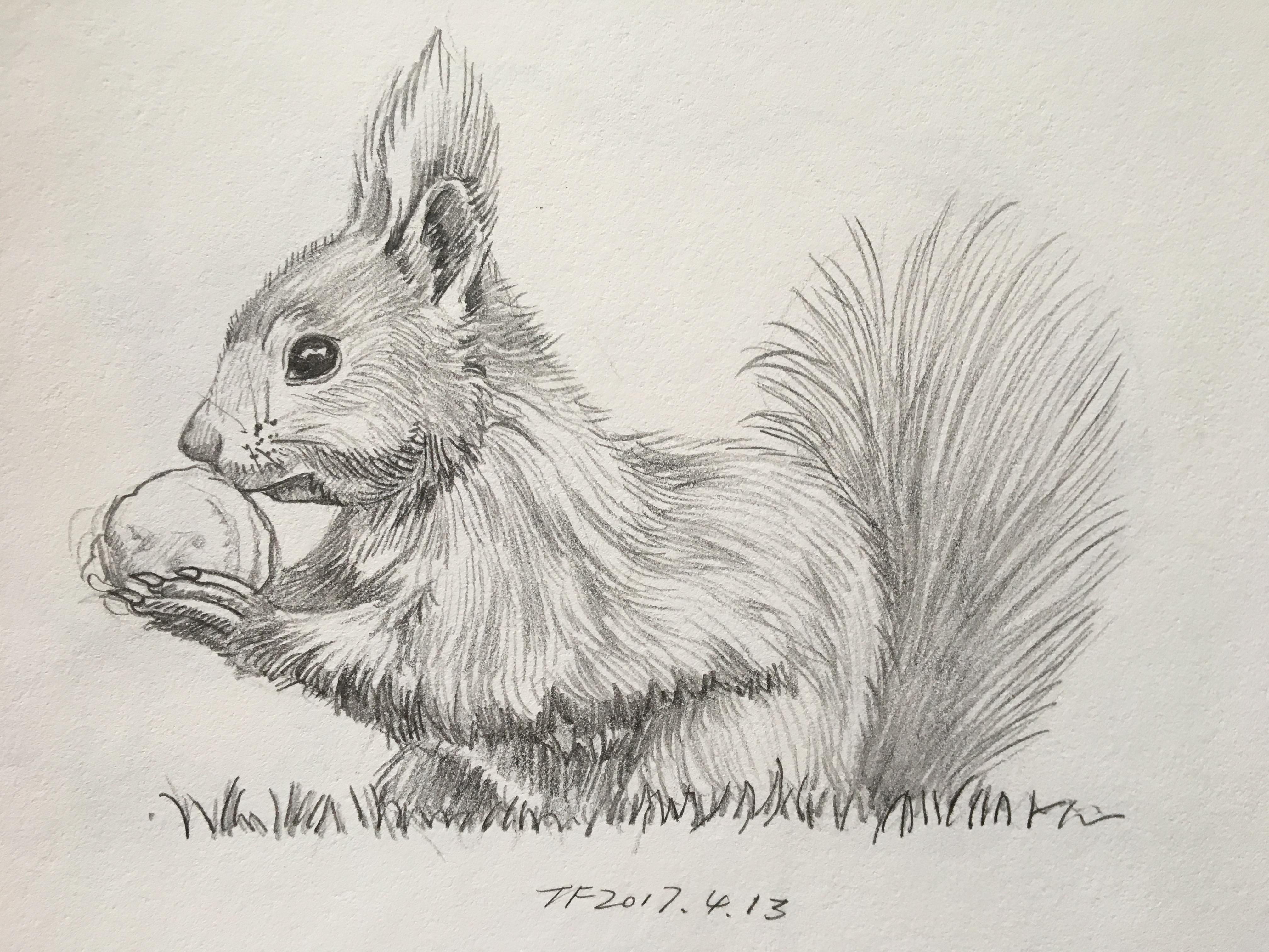 铅笔画 动物篇