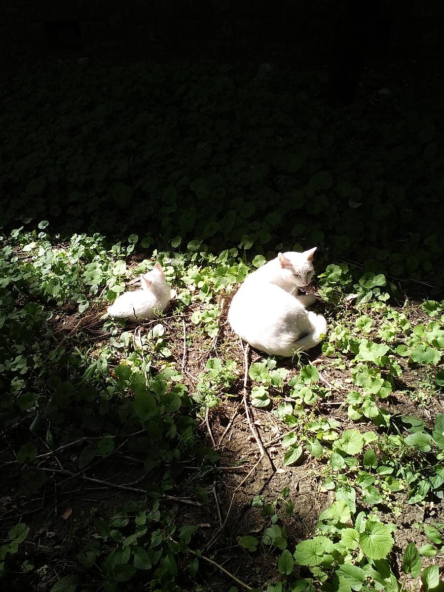 阳光下的猫|宠物/动物|摄影|abdc - 原创设计作品