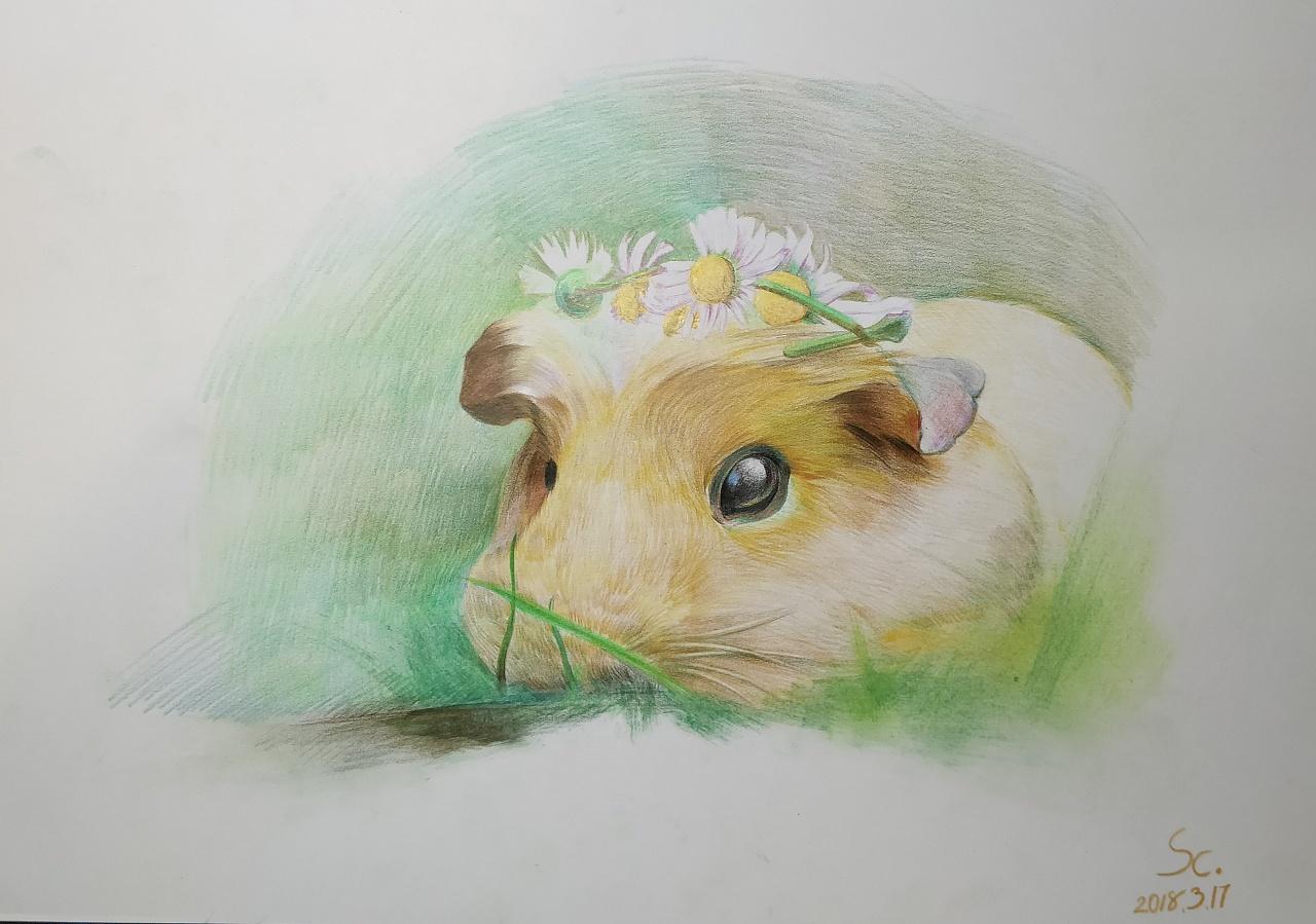 彩铅小仓鼠