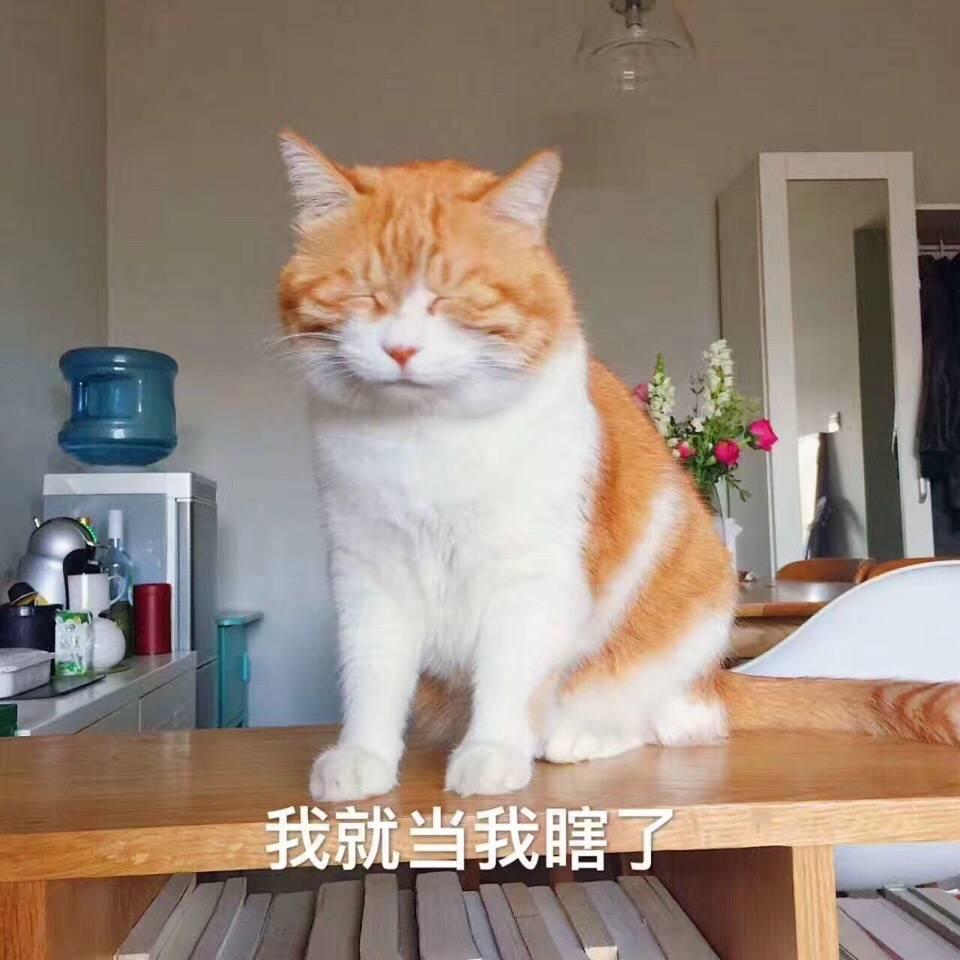 橘猫的表情包图片搞笑图片