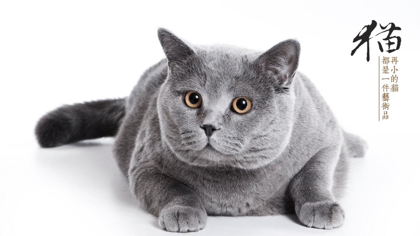 欧欧猫微信表情包图片