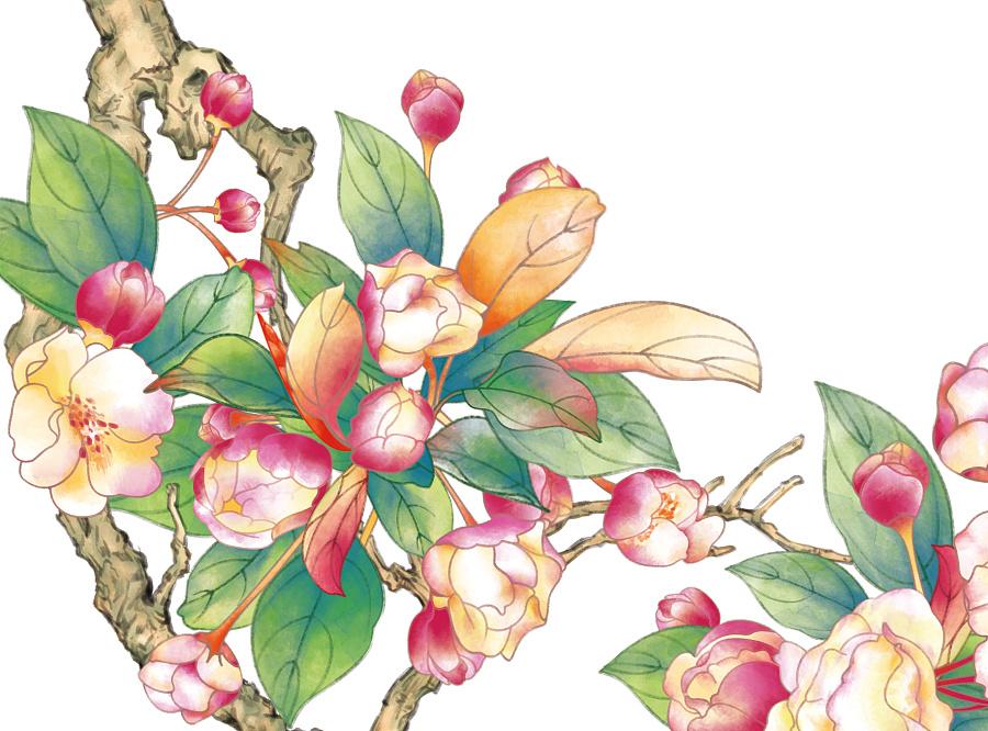 手绘插画-带质感花朵|商业插画|插画|candy瑜