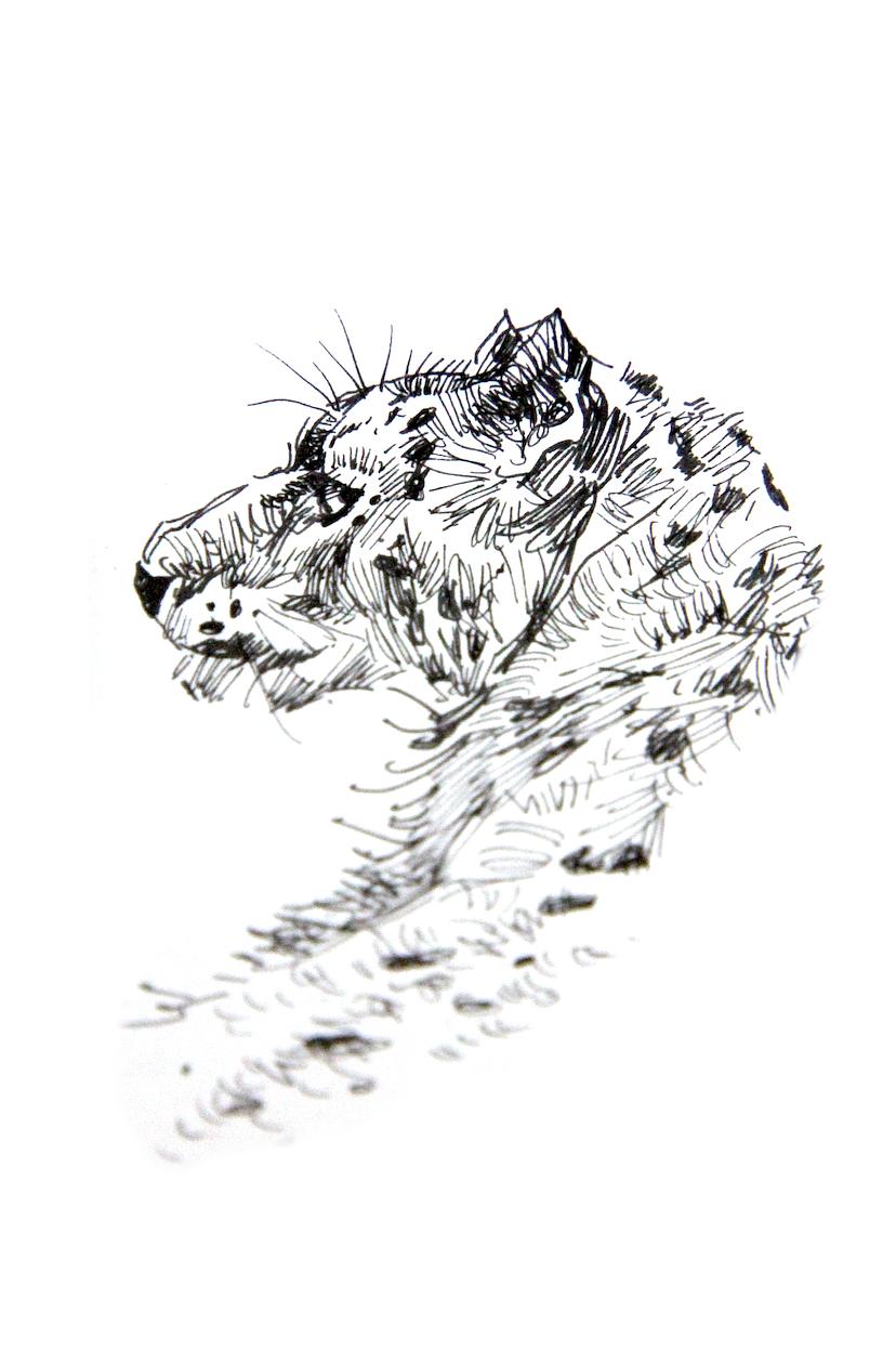 彩铅练习-虎