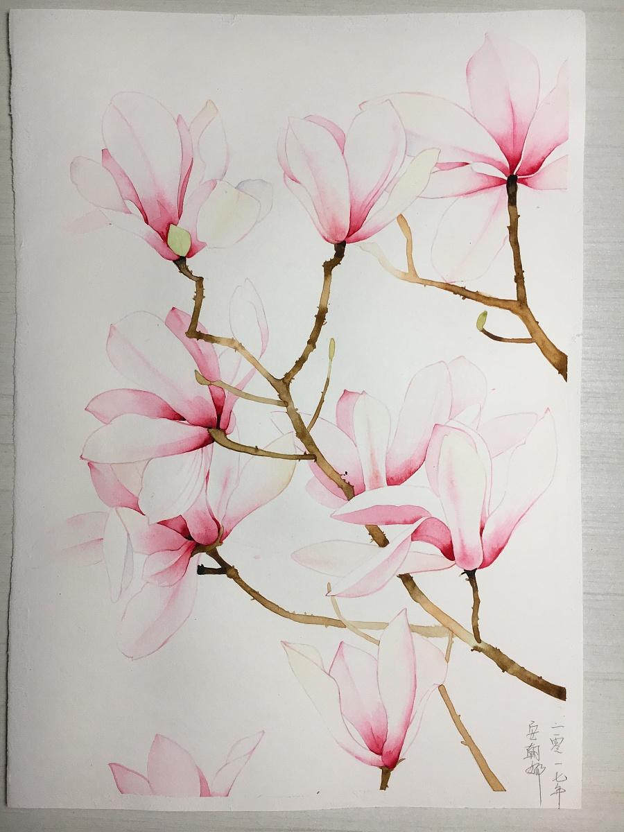 玉兰花水彩手绘|绘画习作|插画|天空安静 - 原创设计