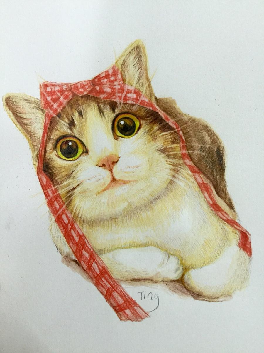 彩铅猫咪|彩铅|纯艺术|粉沫亭亭