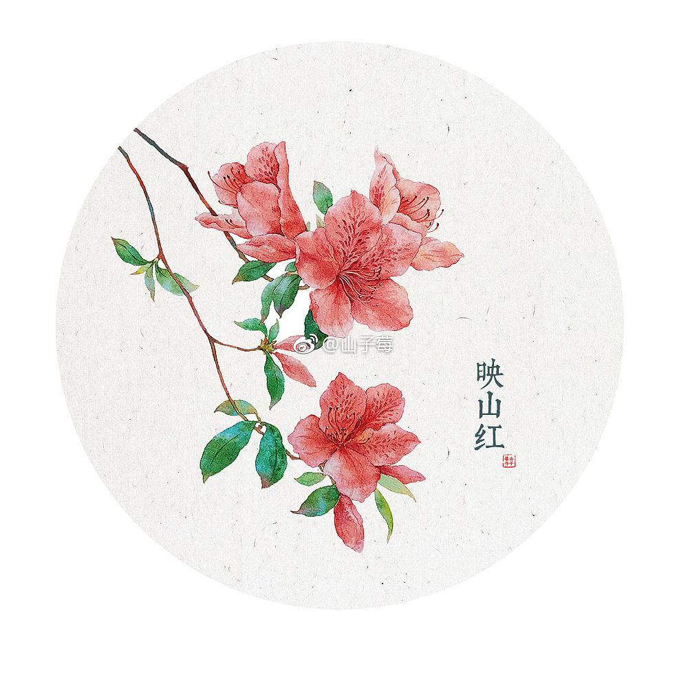 一组水彩画,花卉植物^_^   图片