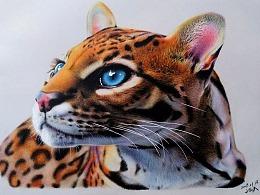 JF手绘彩铅画作品