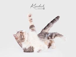 Cute Kitten【克查原创作品26】