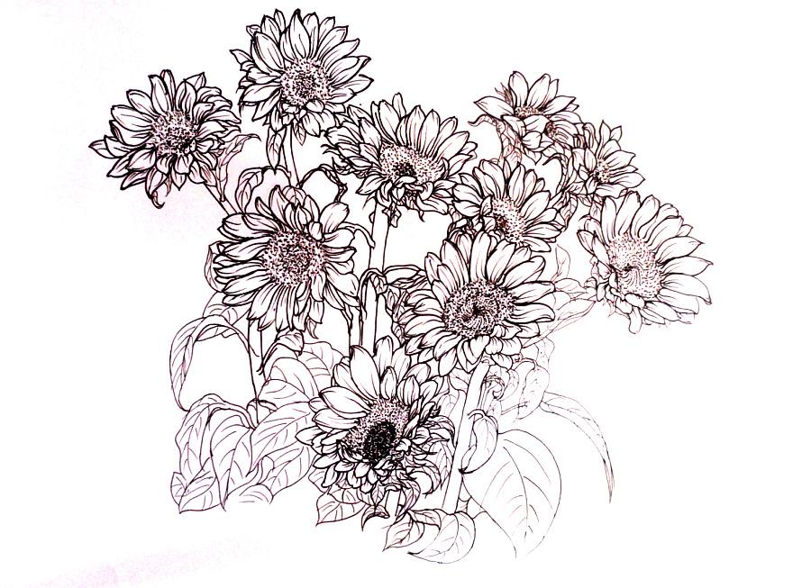 原创作品:手绘线描