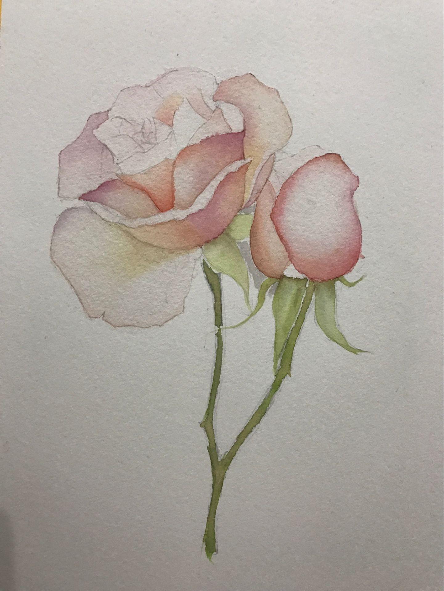 玫瑰花|纯艺术|彩铅|peter_zhong - 原创作品 - 站酷图片
