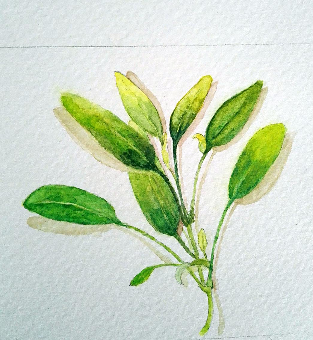植物癹��yi)�f_植物