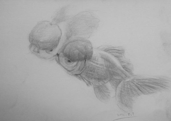 动物素描小作|素描|纯艺术|h笛风h