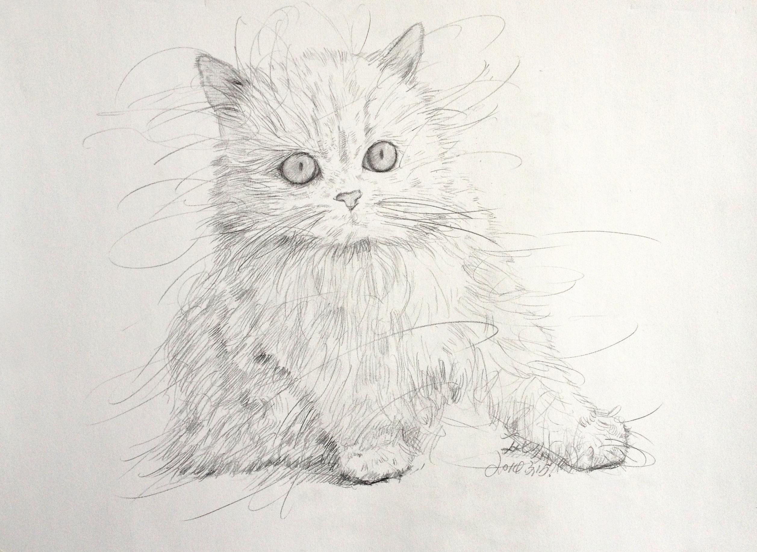 艺术猫简笔画-女 简笔