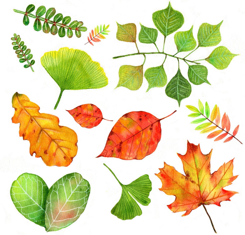 水彩画-树叶 甜品 比基尼 英文字母图片