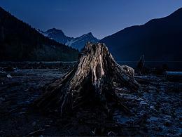 如果最后一棵树倒下