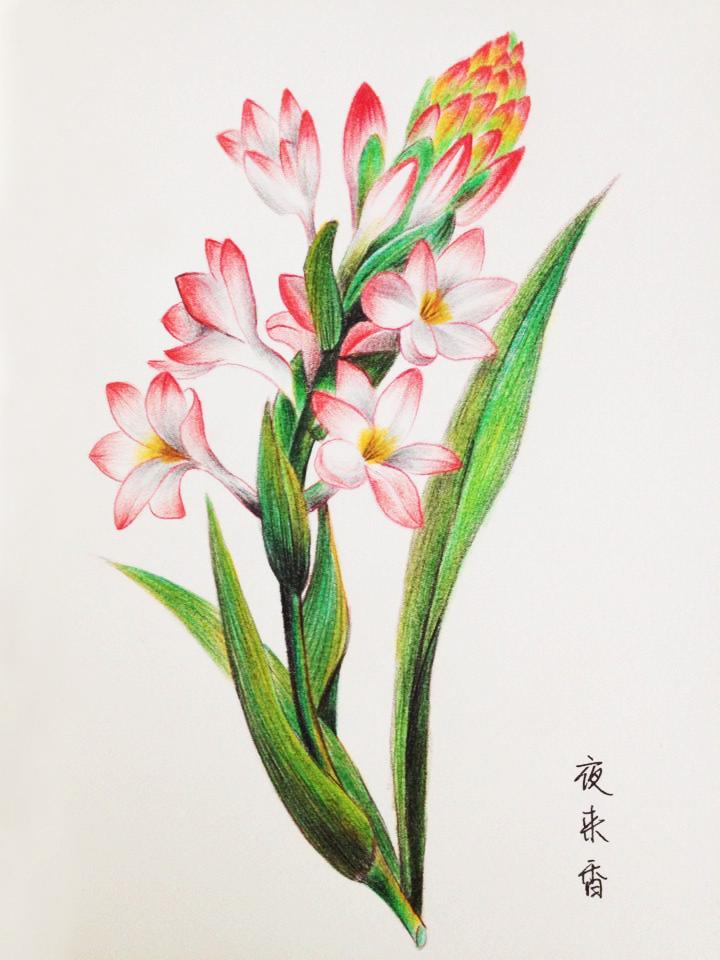 各种花卉手绘,临摹,学习中,手
