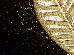 PS怎样把叶子做出黄金金属效果