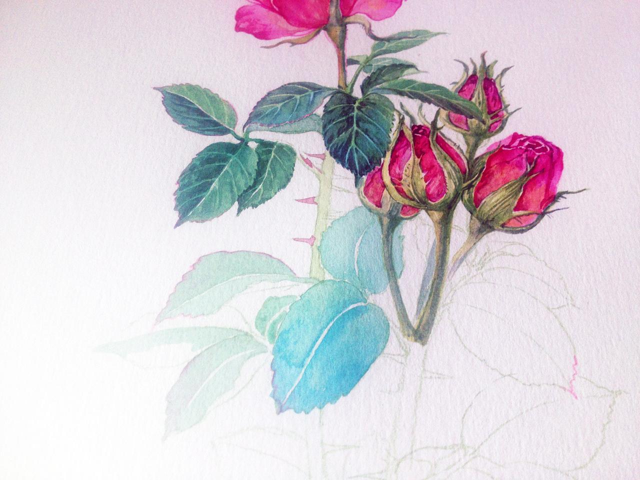 几种植物花卉的水彩画步骤