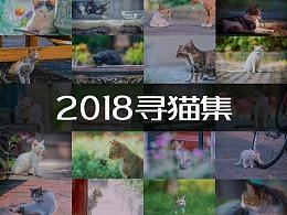2018寻猫集-记录流浪猫的瞬间